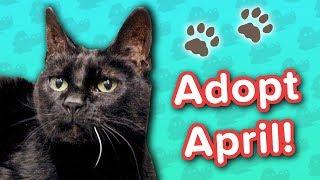 Adopt April! // Black Cat // Adoption Featurette