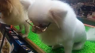 หมาใส่แว่นตา มองหาอะไร