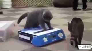 Смешные кошки видео , подборка интересных фрагментов