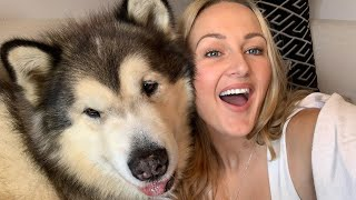 MALE V FEMALE CUDDLES AND KISSES | ALASKAN MALAMUTE