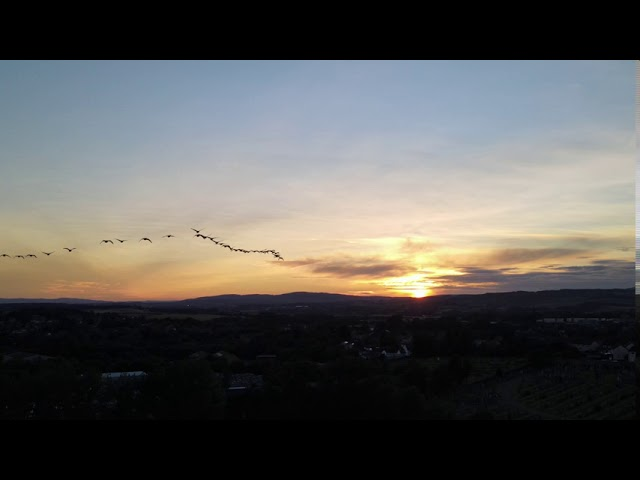 Sunset Geese in formation over Woodilee, Lenzie, Glasgow