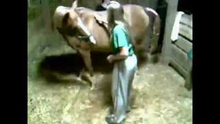 Old Forge Hill Farm-Mare foaling-Second Stage Labor-Clipsy and Fire