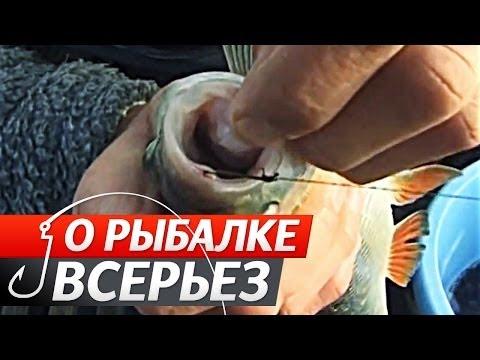 Ловля хищной рыбы на Живца поздней осенью. О Рыбалке Всерьез видео 142.