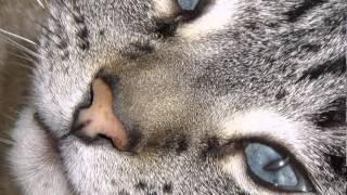 """""""Птица Зу"""".. Кошка."""