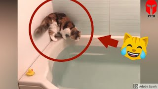 مواقف مضحكة و محرجة للقطط |  ستراها لأول مرة في حياتك 😂😂😂  #11