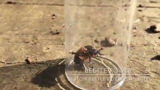 Wildlife Gadget Man - Beetle Power