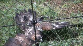 多摩動物公園にて 鷲が動かなくなったので、蛇にやられたのか、と思った...
