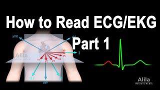 Comment Lire l'ECG/EKG, Partie 1, de l'Animation