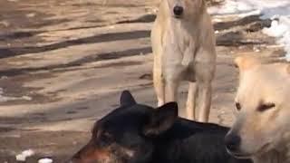 Укусы собак – что делать?