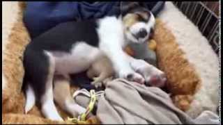 Training Puppies Without Stress, Shouting, Or Screaming.