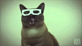 Dubstep hipster cat (longer version)