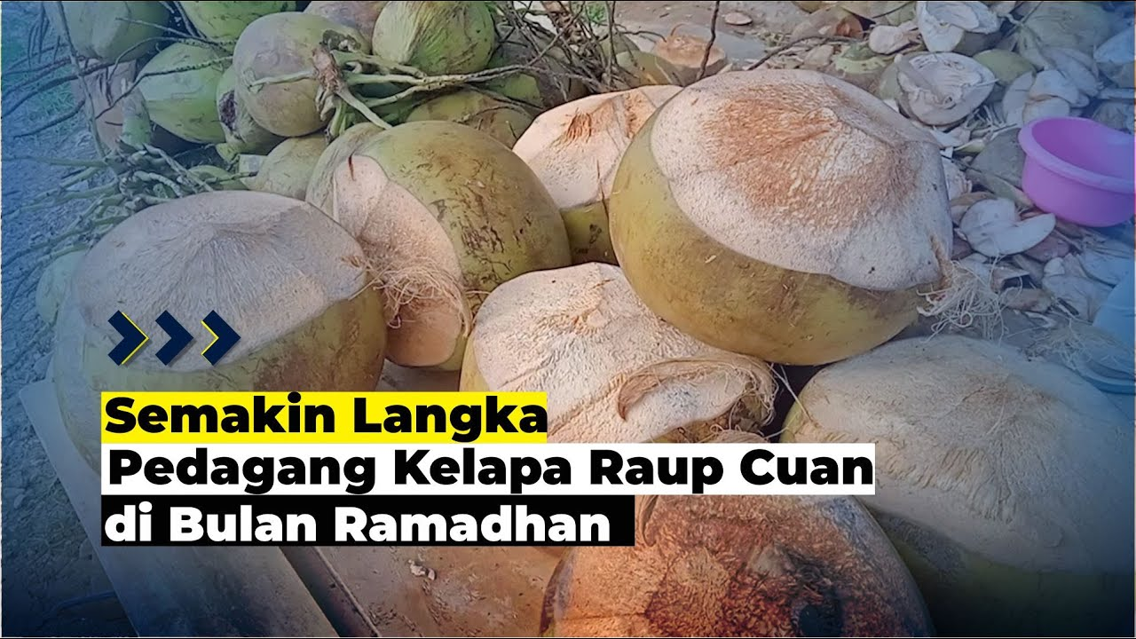 Pedagang Kelapa Muda Raup Untung di Bulan Ramadan