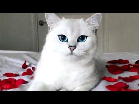Вопрос: Почему у всех маленьких котят голубые глаза?
