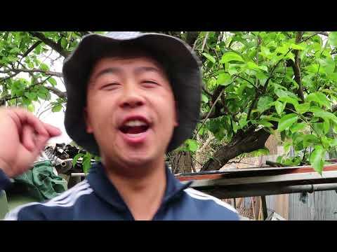 EVERY ASIAN BACKYARD!