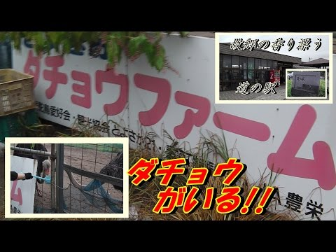 """道の駅に「ダチョウがいる!」 豊栄 新潟市/ """"Ostrich is present!"""" To the station of the road Toyosaka Niigata"""