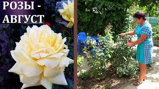 Чем подкормить розы в августе