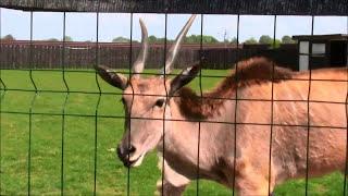 Zoo Wojciechów - Park Zwierząt, Rozrywki i Edukacji  /07