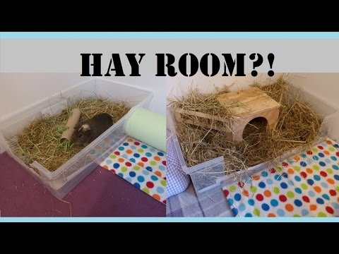 guinea-pigs-cages:-how-to-make-your-own-hay-room!-|-squeak-dreams