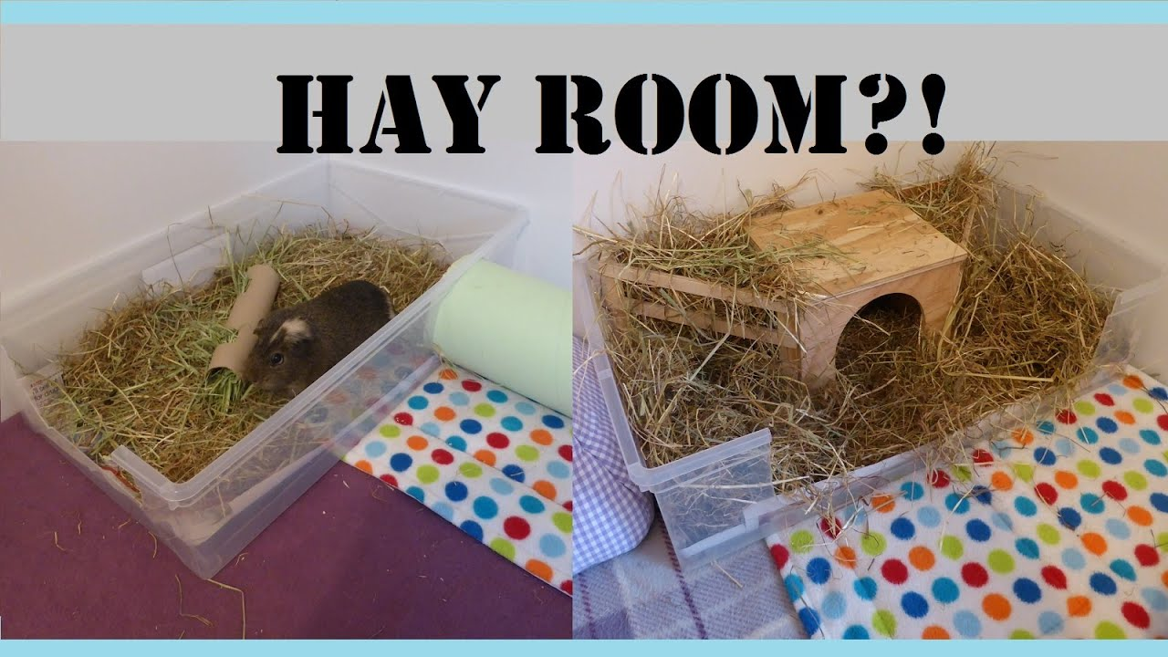 Guinea Pigs Cages How To Make Your Own Hay Room Squeak