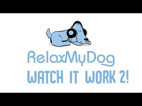 relaxmydog-watch-it-work-2!