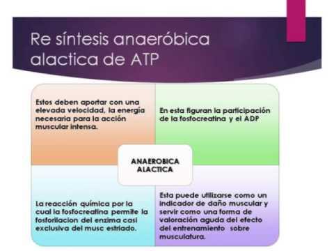 Que Es La Capacidad Aerobica Y Anaerobica En Educacion Fisica Luces Aeróbica Y Anaeróbica Principales Diferencias