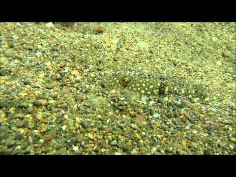 和歌山県湯浅町田海水浴場 Japan Wakayama Prefecture Yuasa-cho, [field] beach skin diving