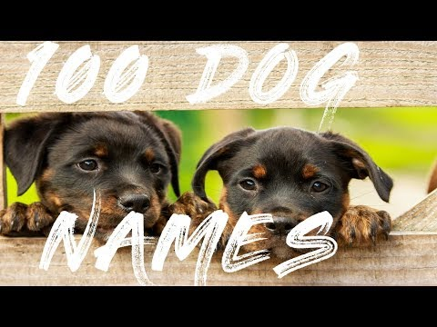 100 Dog Names For Boy And Girl Dogs 2018