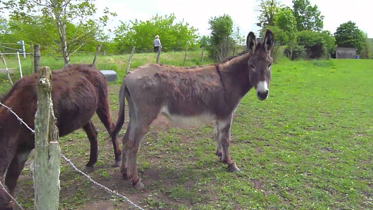 3 chevaux et un couple d'ânes - youtube