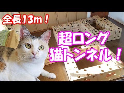 """超ロングなダンボール猫トンネルに挑むネコ吉! Neko Cat tried the """"Ultra long handmade cardboard cat house"""""""