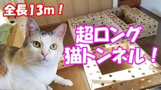"超ロングなダンボール猫トンネルに挑むネコ吉! Neko Cat tried the ""Ultra long handmade cardboard cat house"" thumbnail"