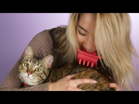 Thumbnail: People Lick Their Cats With The Licki Brush