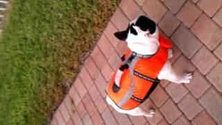 French Bulldog In Lifejacket