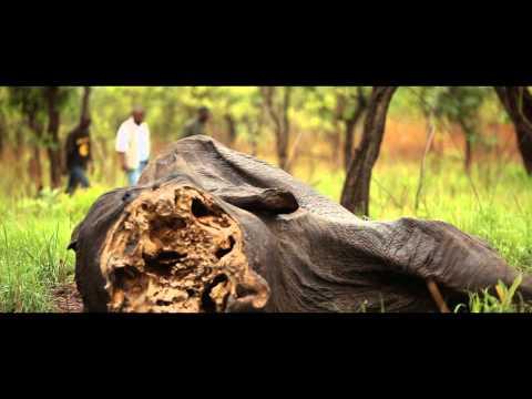 Cameroon elephant slaughter | WWF