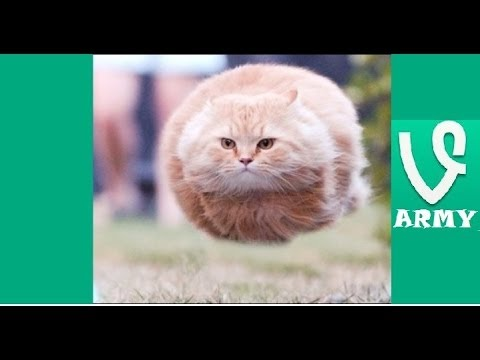 I Believe I Can Fly  FUNNIEST VINES Compilation HD Part 29