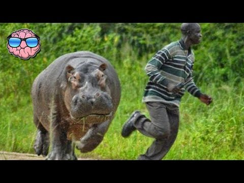 Top 10 MOST DANGEROUS Animals In AFRICA