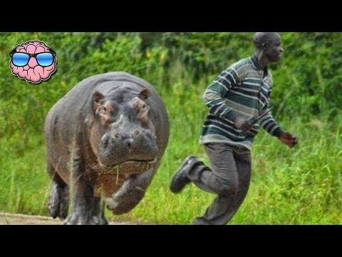 Top 10 MOST DANGEROUS Animals In AFRICA