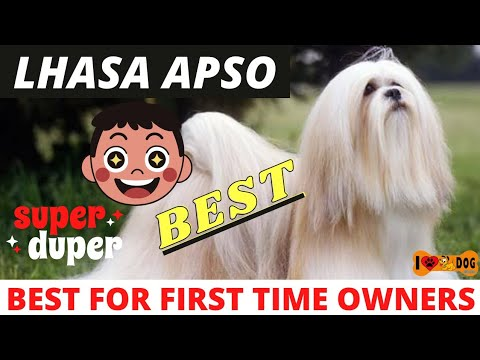 Know About Lhasa Apso Dog Breed In Hindi - I Love Dogs