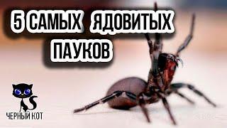 Самые ядовитые и опасные пауки в мире / Интересные факты о животных