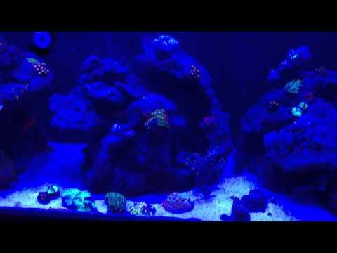Aqua Reef 400L with Jebao RW 15 wave makers and Maxspect R420R 300W light.