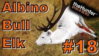 Albino Bull Elk | theHunter: Call of the Wild 2017