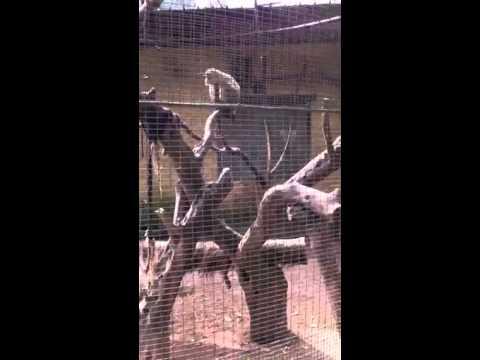 Gradina zoo din italia