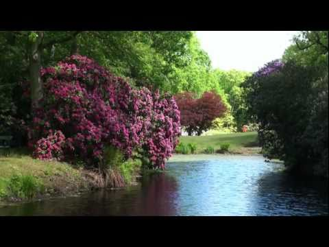 Lütetsburger Schlosspark Rhododendron- und Azaleenblüte