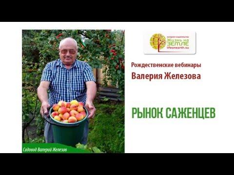 Рынок саженцев плодовых деревьев в России. Валерий Железов