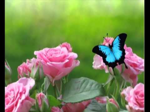 "А.Фет. Стихотворение ""Бабочка"""
