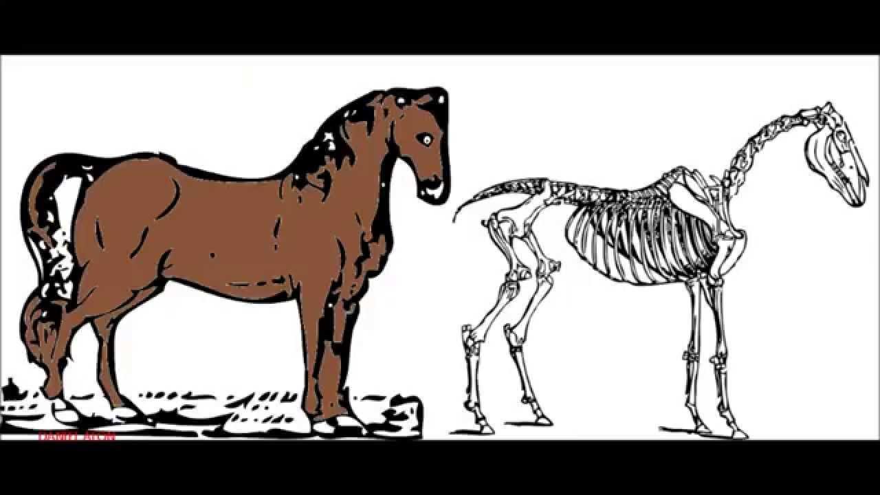 Animales invertebrados: ejemplos y caractersticas - con fotos 76