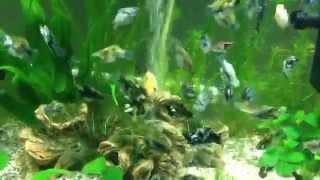 tropical fish tank interpet fishbox 64 litre