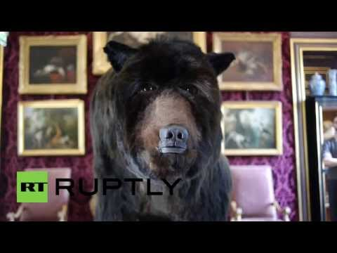 French Artist to Live inside Grizzly Bear Carcass for Thirteen Days