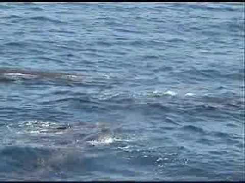 海洋錄音影像側記
