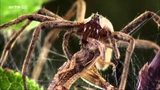 Super Spider (deutsch)