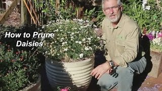 Video How to Prune Daisies download MP3, 3GP, MP4, WEBM, AVI, FLV Agustus 2018